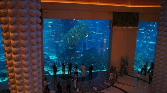 The Lost Chambers Aquarium: Widok na akwarium