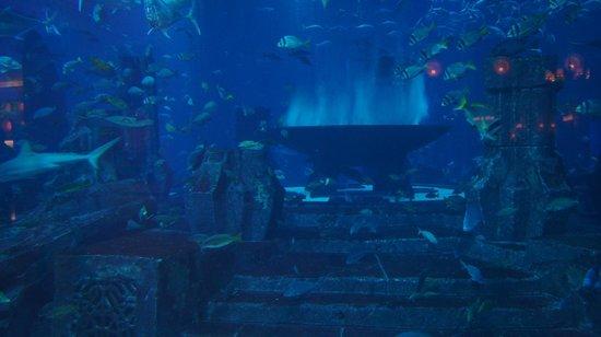 Tehran Aquarium : Aquarium in Atlantis, The Palm - Foto van The Lost Chambers Aquarium ...