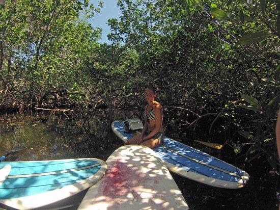 SUP Key West: Kristen, Queen Of The Copse!