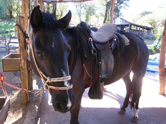 Sabine's Smiling Horses : Ready?