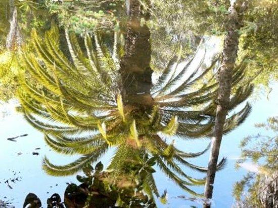 The Repose : Les Jardins Exotiques de Bouknadel