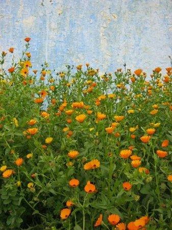 The Repose : Mohammedia Beach Flowers