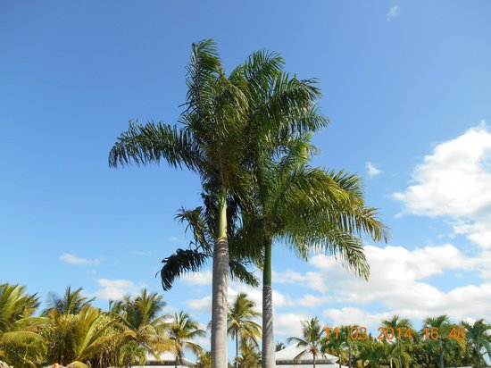 Grand Bahia Principe San Juan : grounds