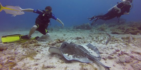 Always Diving & Water Sports : stingray!