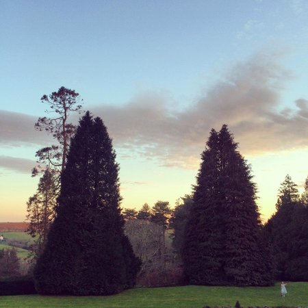 Buckland Tout-Saints Hotel : What a beautiful evening!
