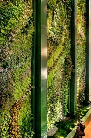 Über 6.000 tropische Pflanzen blühen und ranken auf einer 270 qm ...