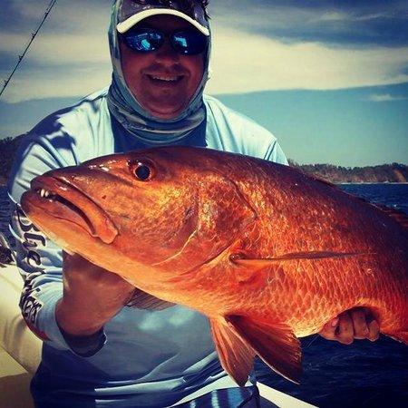 Sport Fish Panama Island Lodge: Cubera