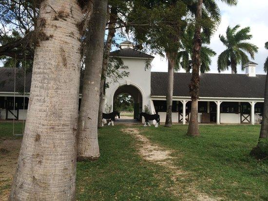 Half Moon: Equestrian Centre