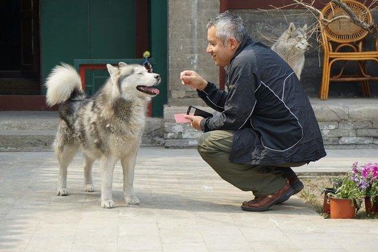 Courtyard 7: La marvillosa pareja de huskies siberianos que estan de permanentes vecinos...