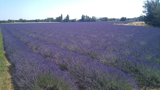 Occitania Provence Tours
