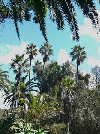 Les Jardins Exotiques de Bouknadel : Many types of palm grow here