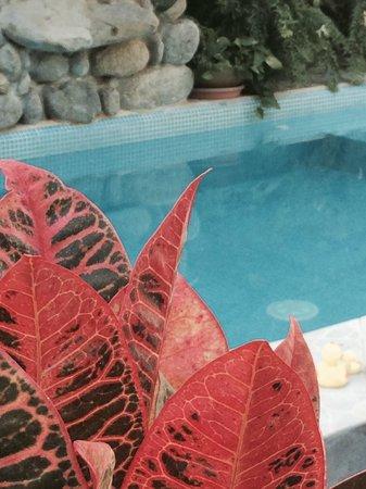 Casa de Piedra: Pool by day!