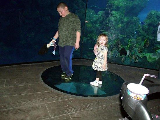 Huge Tanks Picture Of Downtown Aquarium Denver