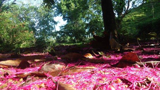 Casita Rio Indio: Naturaleza...