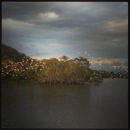 Hotel Bocas del Mar: sunsetcruise