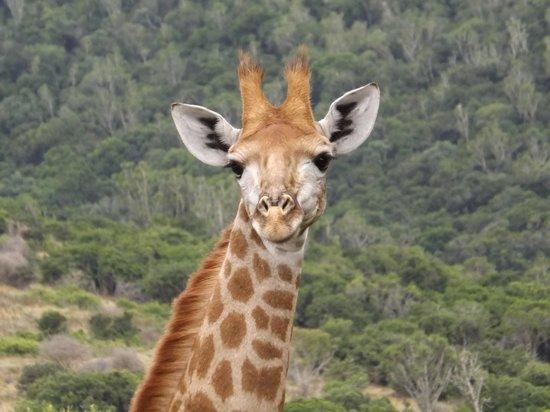 Kariega Ukhozi Lodge : Just love the facial expression