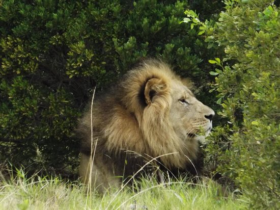 Kariega Game Reserve - Ukhozi Lodge: Delighted to say he'd already eaten!