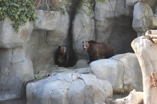 San Diego Zoo : Growl