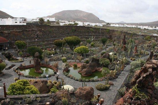 Jardin de cactus from the windmill terrace picture of for Jardineras de cactus