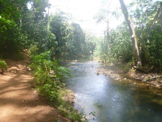 Kayak Wailua : Hiking to the waterfall