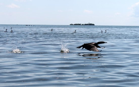 Key West Eco Tours: Birds
