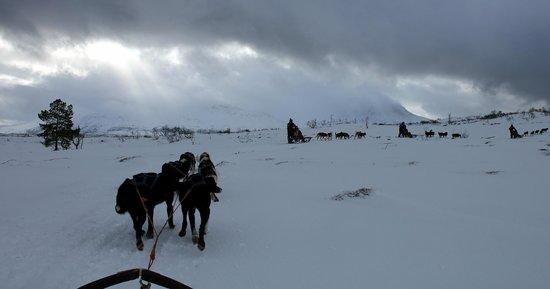 Arctic Adventure Tours: ..