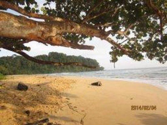 Hostal Bastimentos: Wizard Beach