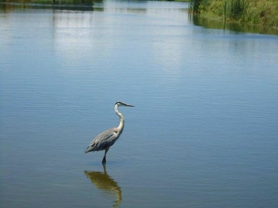 South Padre Island Birding and Nature Center : Cranes and Herons