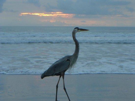 Wakulla Suites : Wildlife on the beach
