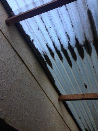"Hotel Jardines de Monteverde: roof of the ""hallway"" otuside our room"