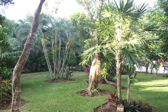 Viva Wyndham Maya: verdure dans le site de l'hôtel