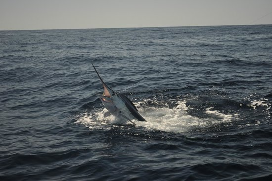 ABY Charters : Fish on!