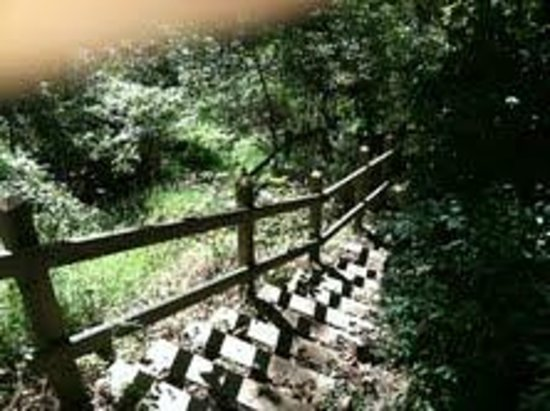 The Wishing Well Guesthouse: Staircase to Ingram Creek and nature stroll.