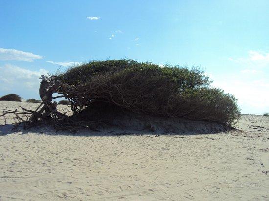 Casa na Praia: Árvore