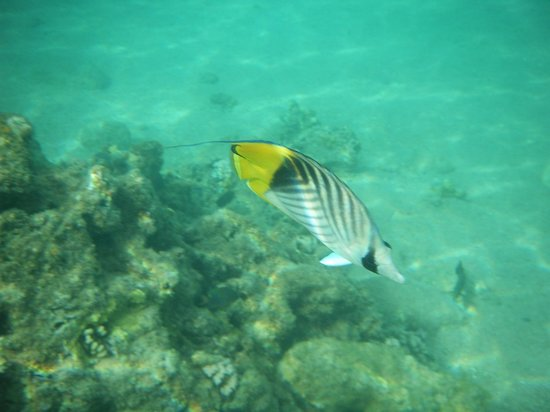 Beach Albatros Sharm: Just some of the wildlife
