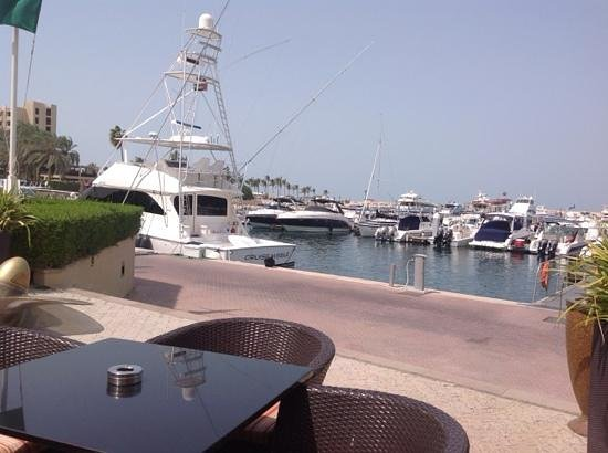 JA Palm Tree Court: Drinks by the marina...