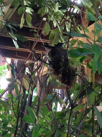 Aldea Naukana Posada Boutique: The hotel's resident hummingbird