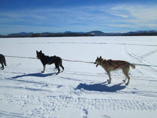 Mahoosuc Guide Service: Lake Umbagog dogsleding