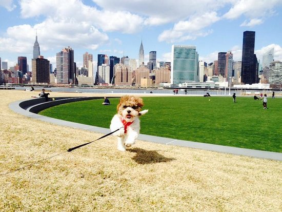 Gantry Plaza State Park : Dogs, families, friends - all welcome at Gantry Park :)