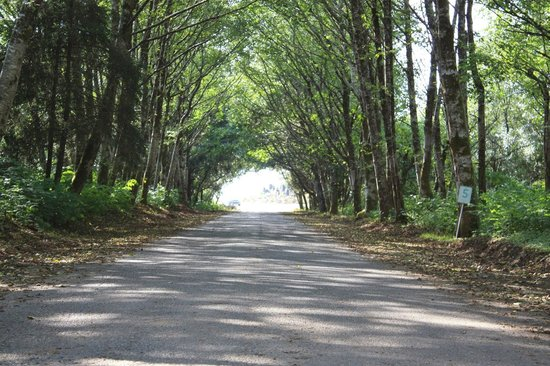 Beachwood Resort: BWR ENTRANCE SUMMER TREE TUNNEL