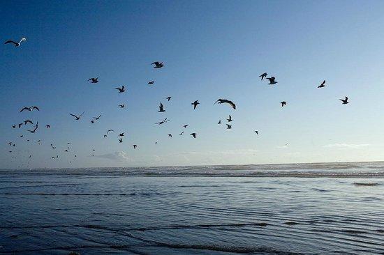 Beachwood Resort: BWR -BIRDS IN THE OCEAN SKY