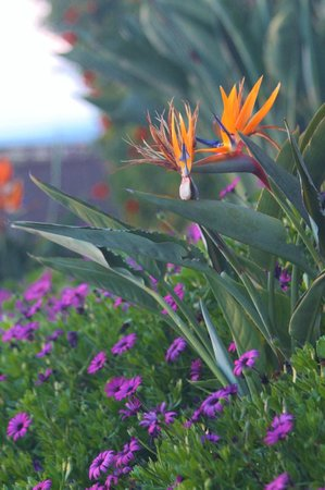 Grand Pacific Palisades Resort and Hotel : Some of the beautiful landscaping of the hotel