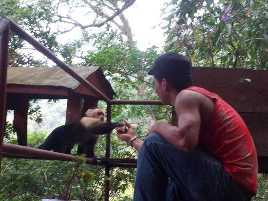 Lost and Found Hostel: Jonathon feeding the capuchin monkey a banana; he usually comes every evening.