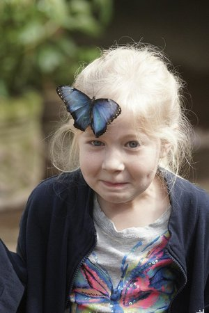 Peace Lodge: Butterfly Garden