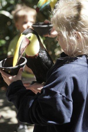 Peace Lodge: Toucan Feeding