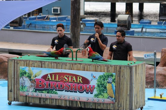 Manila Ocean Park: bird show
