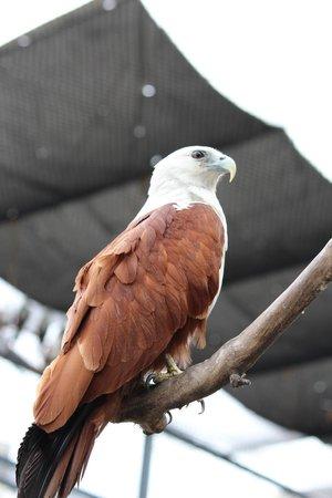 Manila Ocean Park: birds of prey enclosure