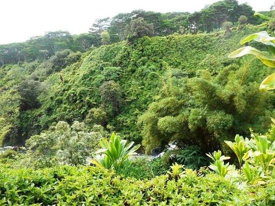 The Inn at Kulaniapia Falls: Gorgeous