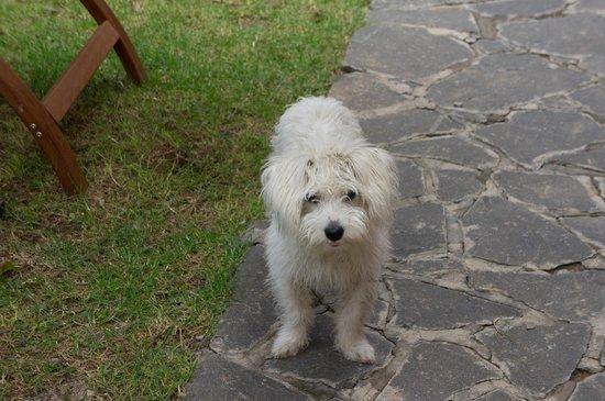 Maison d'Hôtes Mandrosoa : Rio le chien!