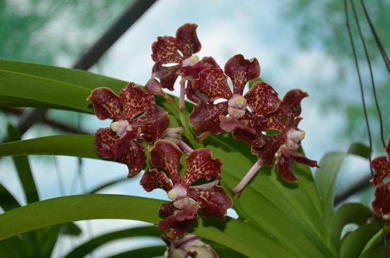 Sarawak Orchid Garden : 5